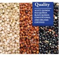 Quinoa Seeds