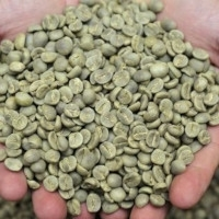 Bali Kintamani Arabica Organic Coffee Grade 1