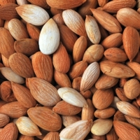 Sweet and Bitter Apricot Kernels