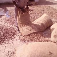 Processed Cashew, Cashew Kernel