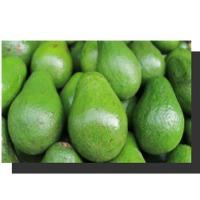 Avocados African Jumbo