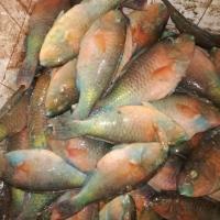 title='Fresh Fish'