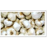 Garlic (Lehsoon)