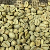 Green Unroasted Arabica Coffee Beans