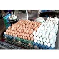 Eggs : Manufacturers, Suppliers, Wholesalers and Exporters