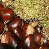 Organic Chestnut