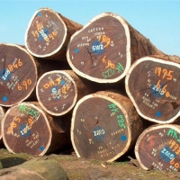 Tali Logs And Sawn Timber