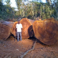 Bubinga Sawn And Wood Logs