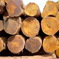 Bilinga Wood Logs And Bubinga Wood Logs
