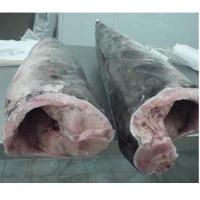 Swordfish HGT