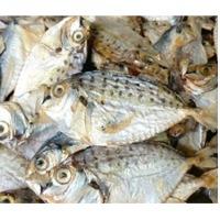 Dryfish Mullet (mullan)