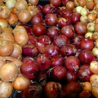 Fresh Red And Yellow Onions