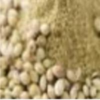 Coriander Seeds And Coriander Powder
