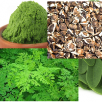 Moringa - The Super Food