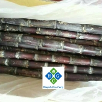 Fresh Raw Sugarcane