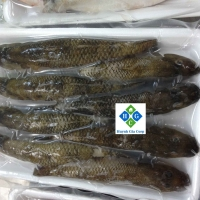 Frozen Sand Goby Fish