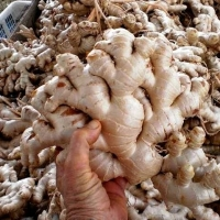 Indonesian Fresh Vegetables Suppliers, Manufacturers