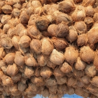Fresh Coconut : Manufacturers, Suppliers, Wholesalers and Exporters