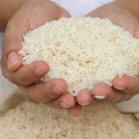 White Glutinous Rice