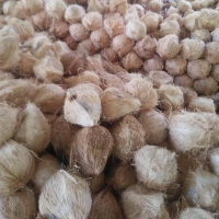 Best Dried Coconuts