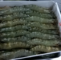 Frozen Black Tiger Shrimp