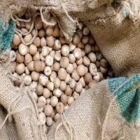 Betel Nut Rounded