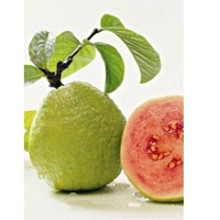 Guava (White/Pink) Pulp
