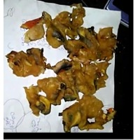 Dried Meat Conch