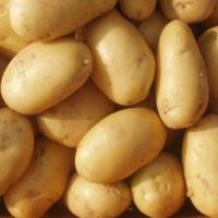 Fresh Yellow Potatoes