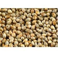 Millet Seeds(Bajra)