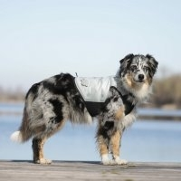 Canicool Dry Cooling Vest For Dogs