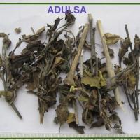 Adhatoda Vasica Extarct