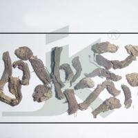 Coleus Forskohlii Extract , (coleus Root)