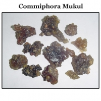 Commiphora Mukul Extract,(guggul Extract)