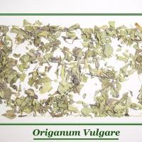Origanum Vulgare, Oregano Extract