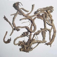 Picrorrhiza Kurroa , Kutki Extract