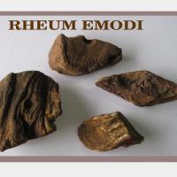 Rheum Emodi Or Indian Rhubarb