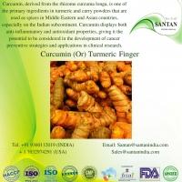 Curcumin And Turmeric Root