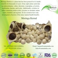 Moringa  Kernel
