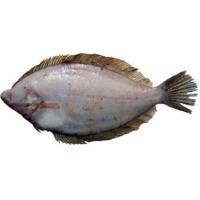 Flounder Sole Fish