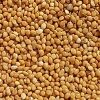 Millet (Yellow, Red, White)