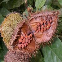 Achiote Herbs