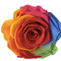 Rainbow Color Preserved Rose