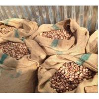 Betel Nut (Areca Nut)
