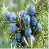 Juniper Berry Essential Water