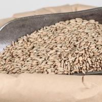 Whole Grain Rye
