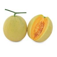 Rumba Melon (Hybrid) Seeds