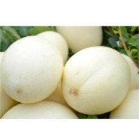 SPML65 Melon (Hybrid) Seeds