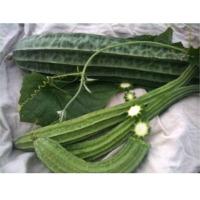 SPLF01 F1 Hybrid Loofah Seeds