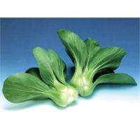 Brisk Green Pai Tsai (Hybrid) Seeds